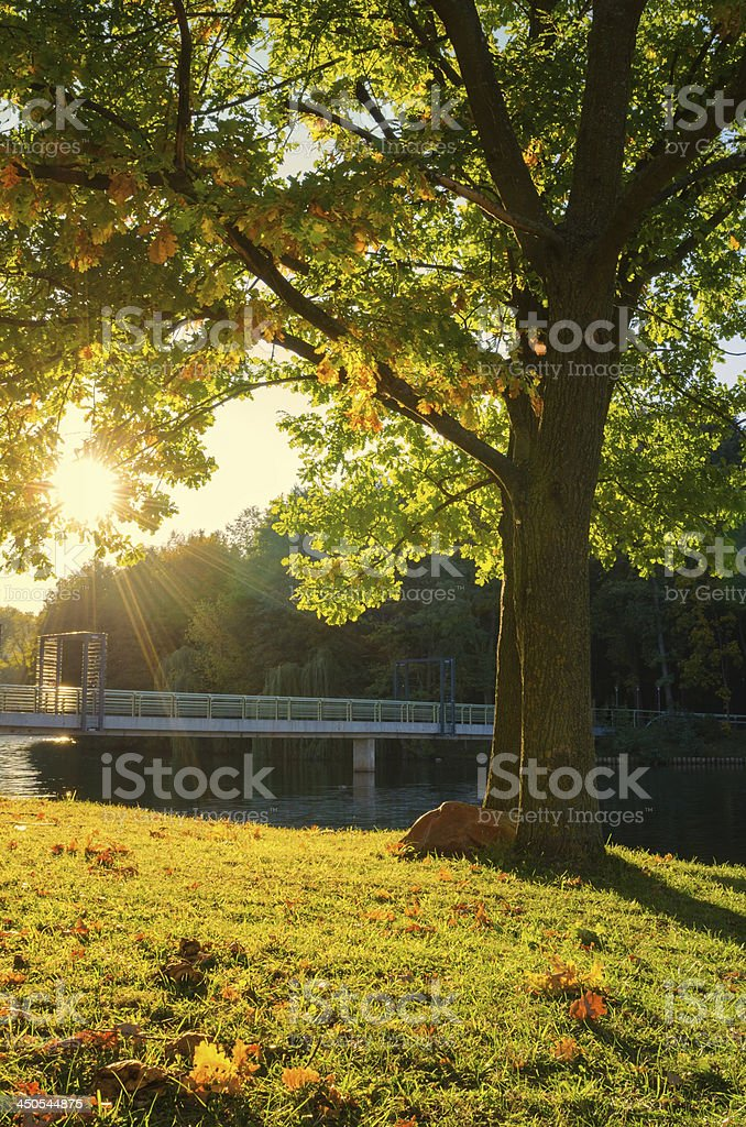 Autumn landscape in city park royalty-free stock photo