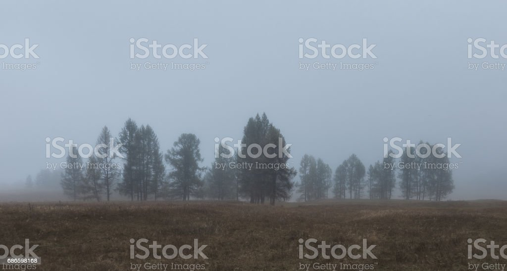 Autumn landscape in in the morning mist royalty-free stock photo