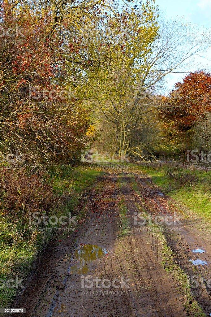 Autumn landscape in November Lizenzfreies stock-foto