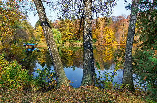 istock Autumn landscape in park with lake. 1150332104