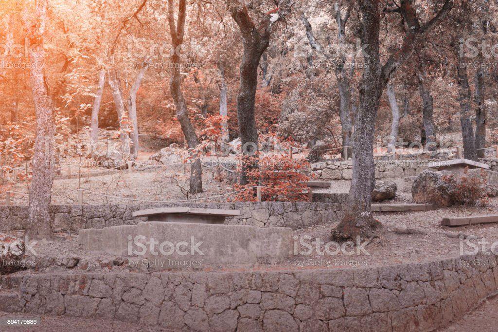 Autumn landscape in the forest royalty-free stock photo