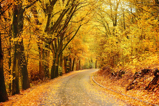 Autumn landscape in the forest with old road stock photo
