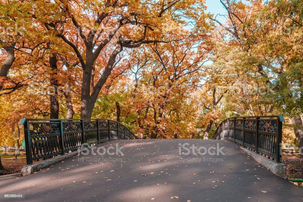 autumn landscape in the mid-latitudes autumn gold stock photo