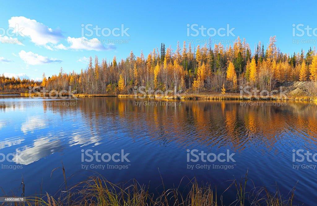 Autumn landscape in the north of Siberia stock photo