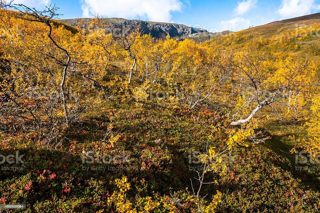 Autumn Landscape in Tundra stock photo