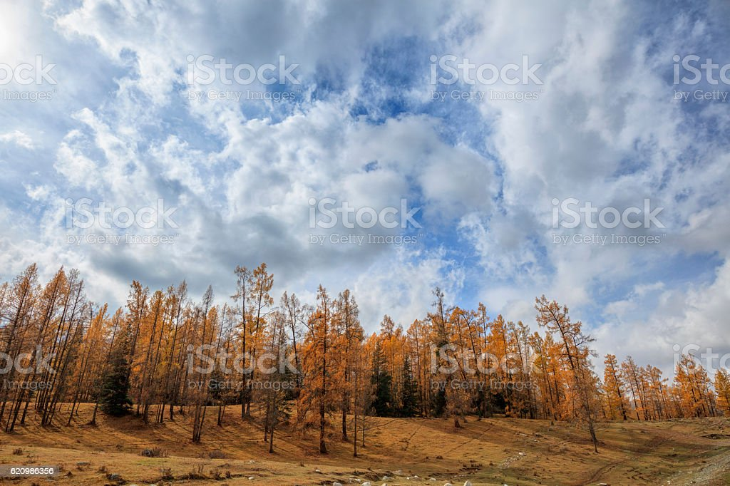 Autumn Landscape Kanas Lake area, Xinjiang, China foto royalty-free