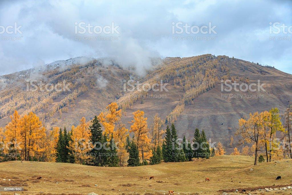 Autumn Landscape Kanas Lake area, Xinjiang, China foto royalty-free