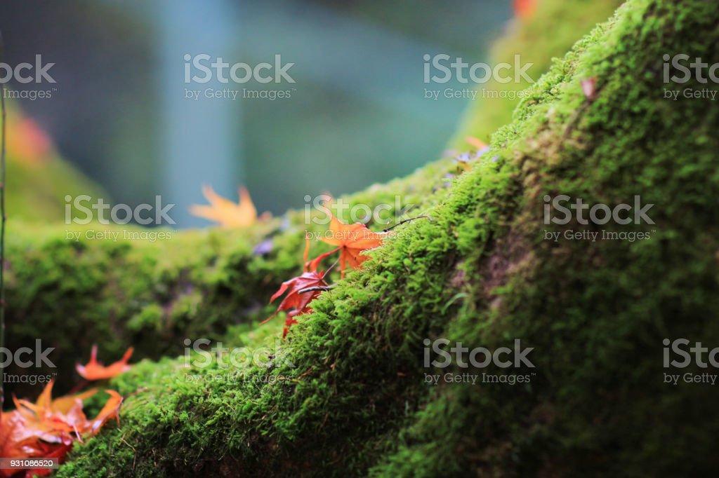 日本園林秋葉景觀圖像檔