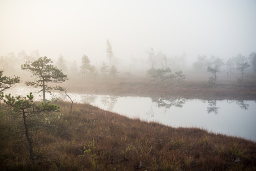 Autumn landscape. Morning fog, swamp and forest in the background. Kemeri, Latvia