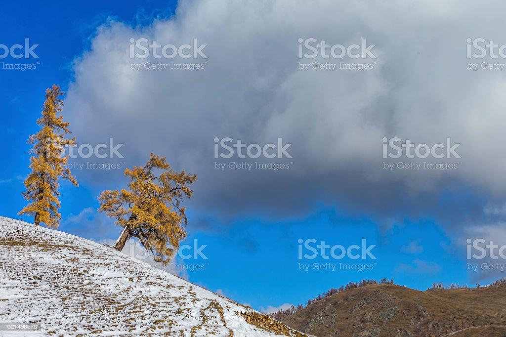 Autumn Landscape near Kanas Lake, Xinjiang, China Lizenzfreies stock-foto