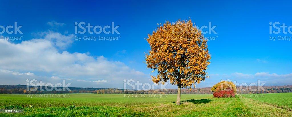 Autumn Landscape, Oak Tree in Green Field under Blue Sky royalty-free stock photo