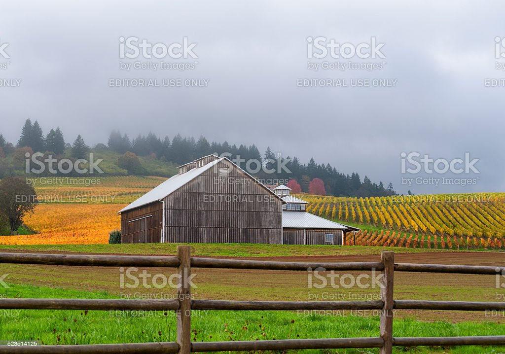Autumn landscape of barn and vinyard in Yamhill County stock photo