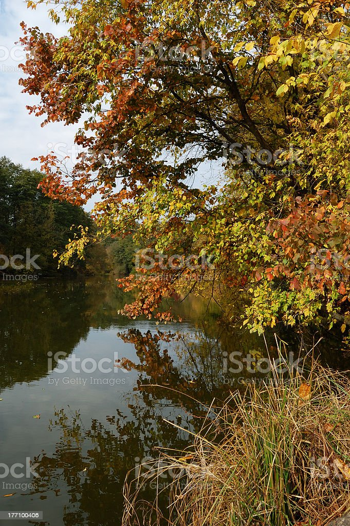 Autumn landscape of lake and bright trees royalty-free stock photo