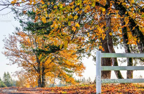 Photo of Autumn landscape of sunlit foliage of trees behind fence on the side of the road