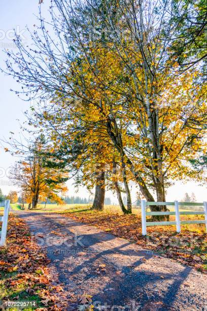 Photo of Autumn landscape of sunny day filling the road with light and trees on the side of the road