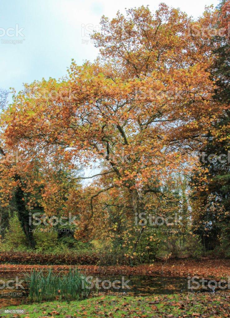 Autumn landscape on a lake royalty-free stock photo