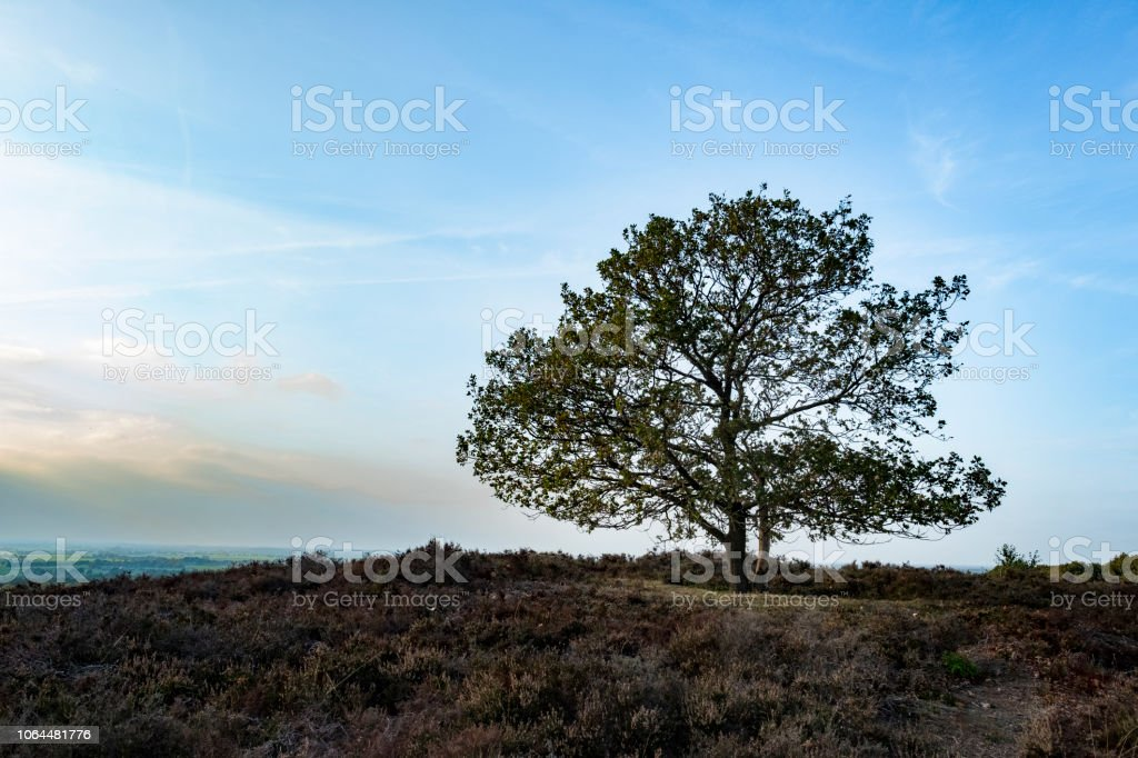 Autumn landscape on the Archemerberg in Overijssel, The Netherlands stock photo