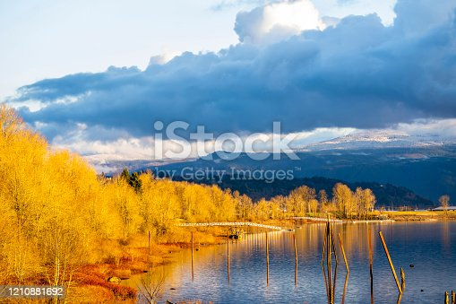 Bright mesmerizing landscape of the Columbia River with yellowed autumn trees on the shore and remains of the wooden pillars of the old marina rows sticking out of the water against a dark cloudy sky