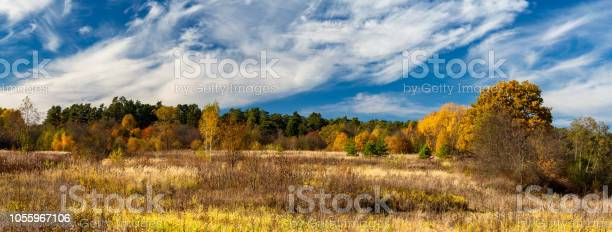 Photo of Autumn landscape. Panorama of the autumn forest behind the field.