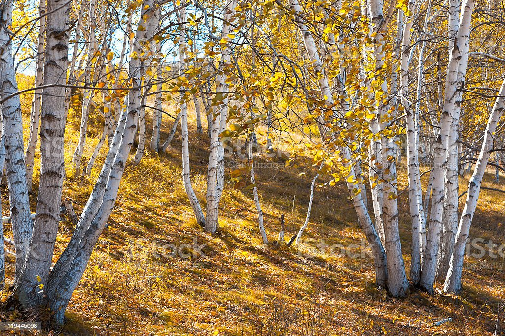 Autumn landscape stock photo