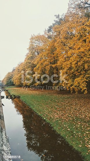 Multicolored trees, fog and brook, misty autumn morning