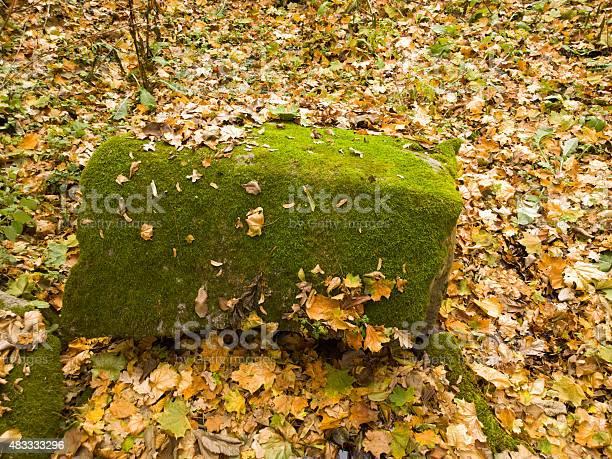 Photo of Autumn landscape.