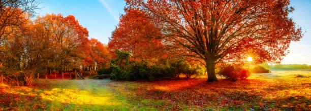 paysage d'automne - feuillage automnal photos et images de collection
