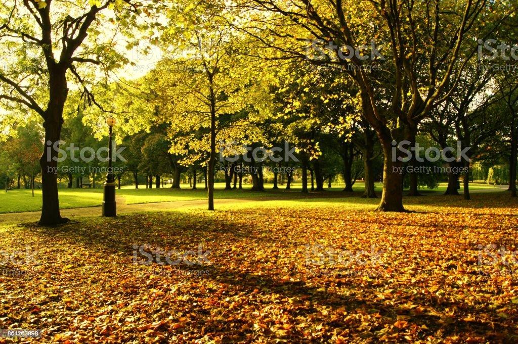 Autumn Landscape. royalty-free stock photo