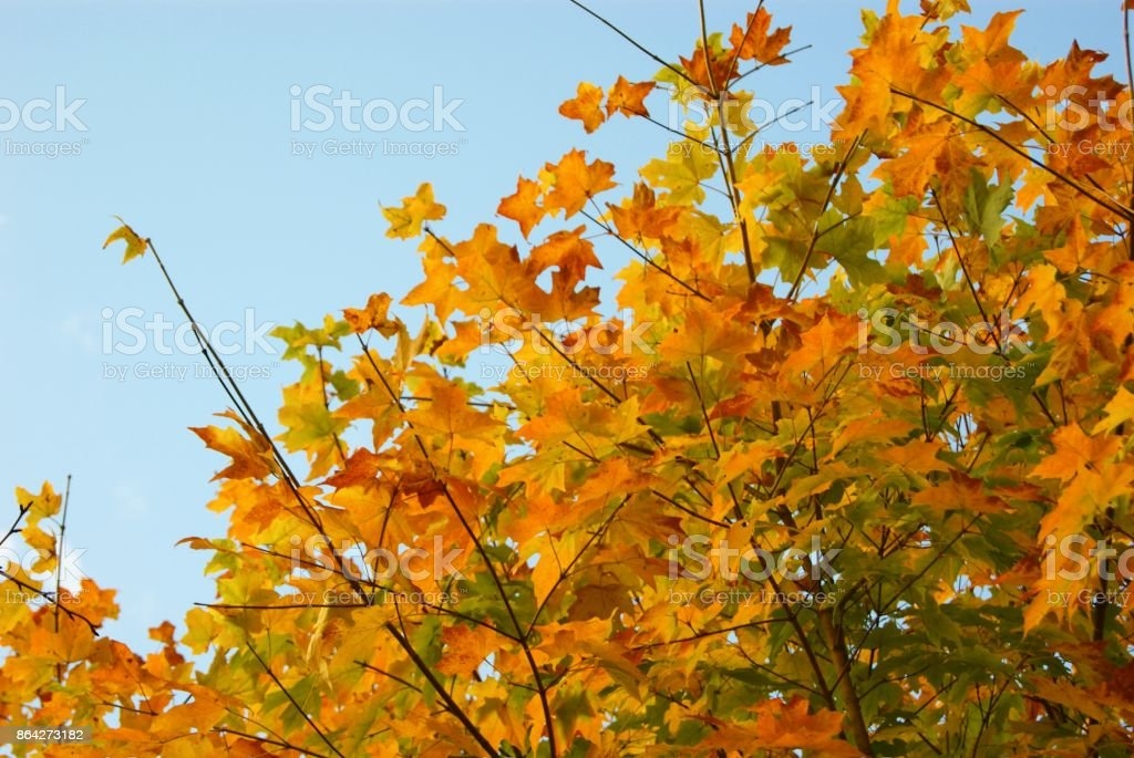 Autumn Landscape. royalty-free stock photo