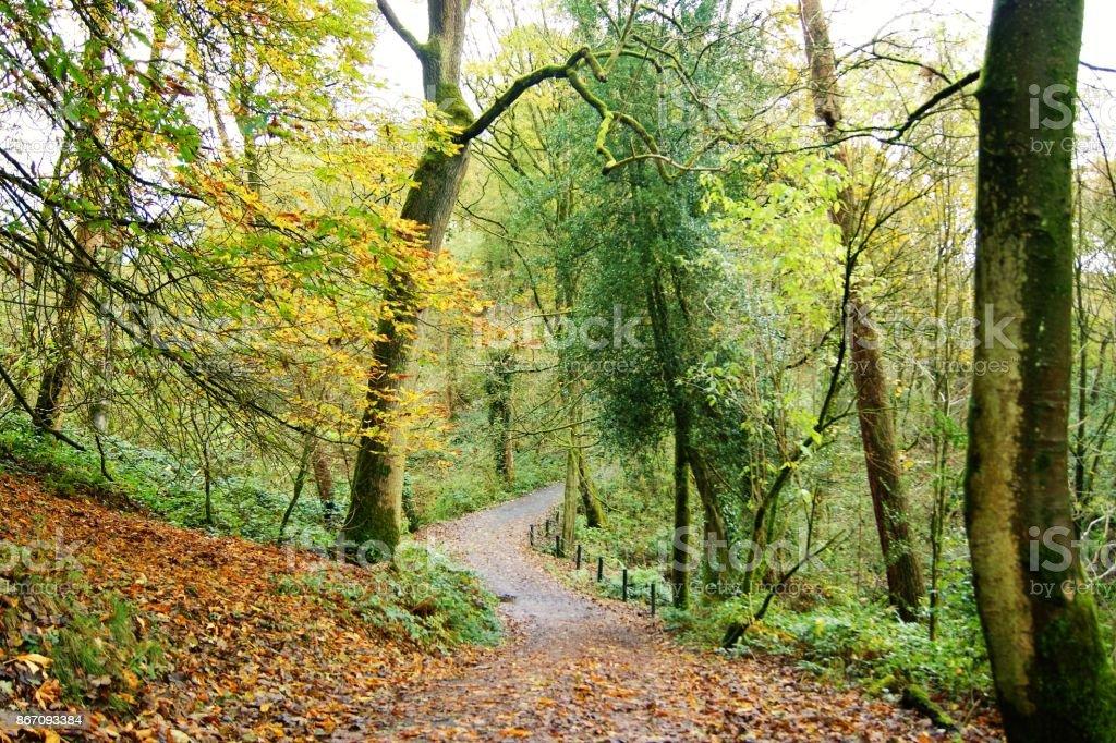 Herbst Landschaft. – Foto