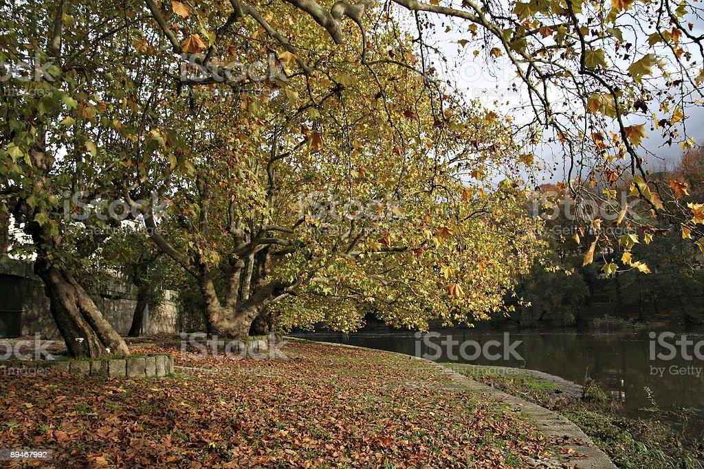 Outono Paisagem - fotografia de stock