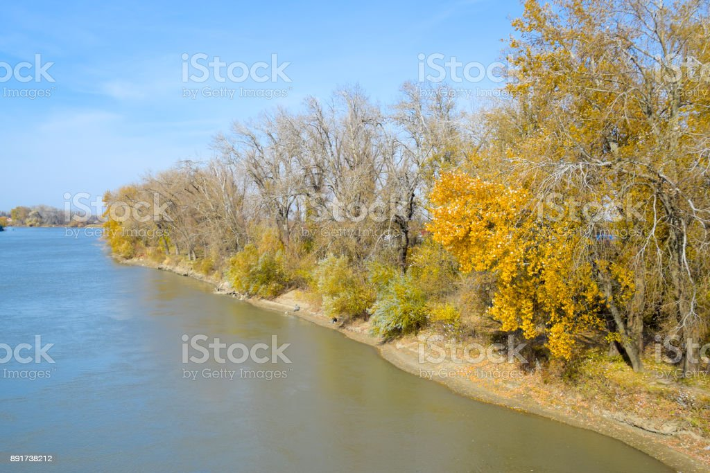 Autumn landscape. River bank with autumn trees. Poplars on the b stock photo