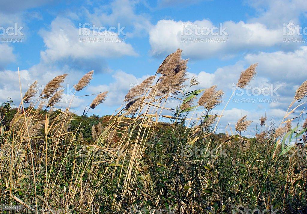 Autumn Landscape Series royalty-free stock photo
