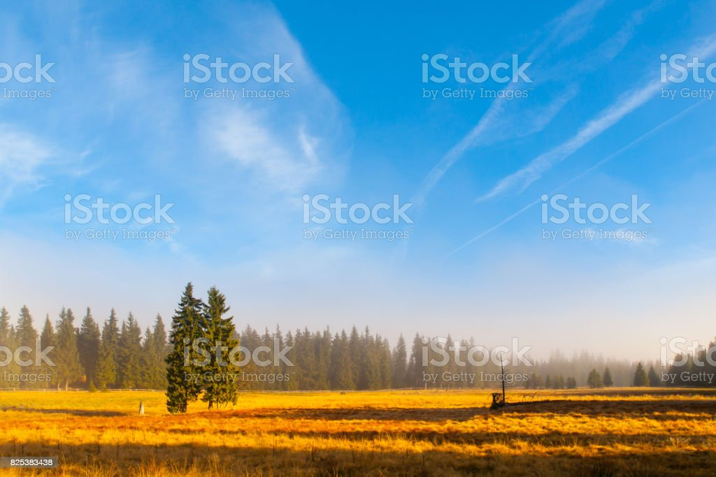 Autumn landscape sunny and hazy morning with two spruces, near Bozi Dar, Krusne Mountains, Czech Republic stock photo