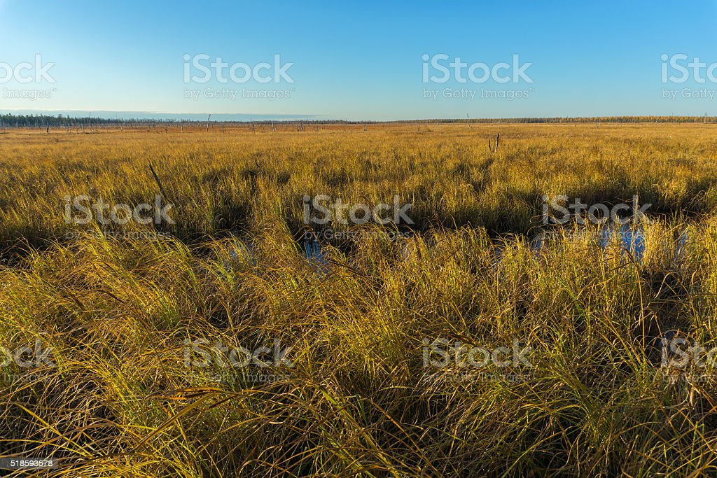 Autumn Landscape tundra stock photo
