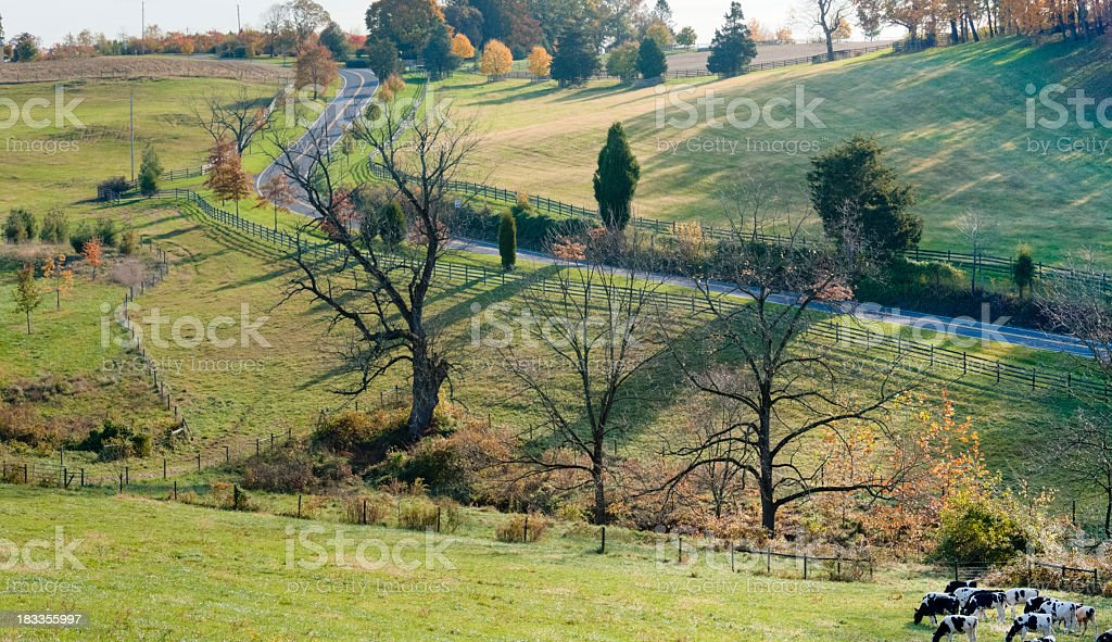 Autumn Landscape with a Country Road and Grazing Cows stock photo