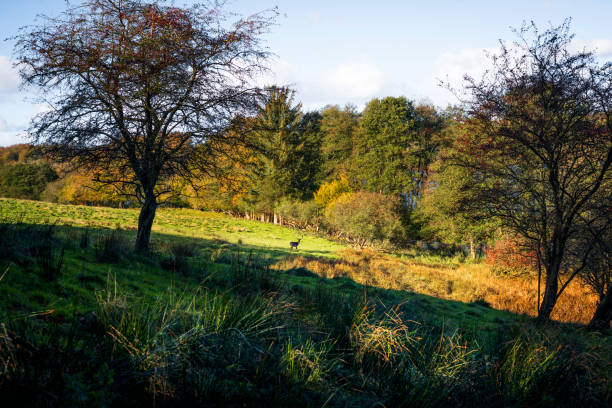 Autumn landscape with a deer at a distance stock photo
