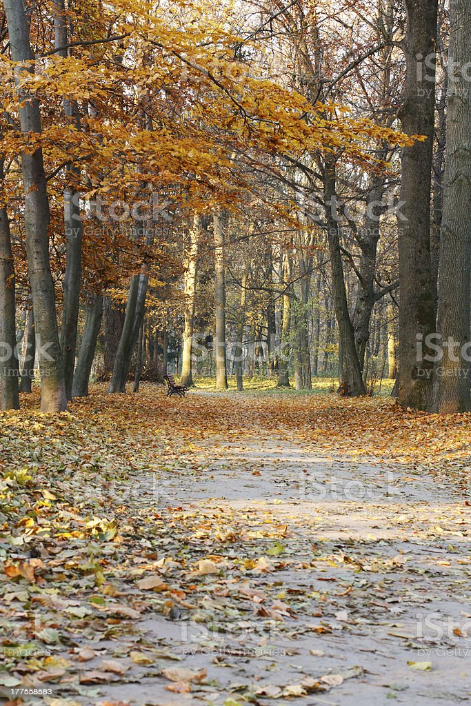 Autumn Landscape with bench and fallen leaves royalty-free stock photo