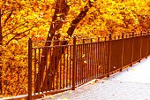 Blur. Autumn landscape. Trees with bright colorful leaves. road