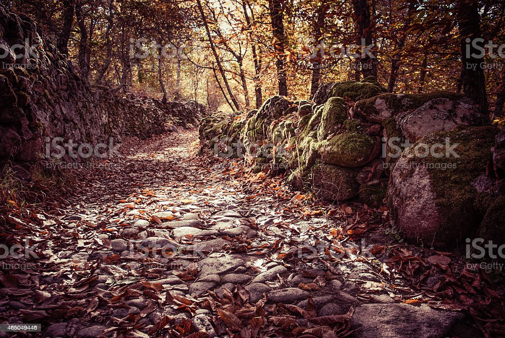autumn landscape with fallen leaves and stone stock photo