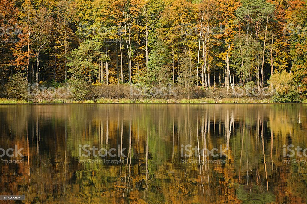 autumn landscape with forest and lake foto de stock royalty-free