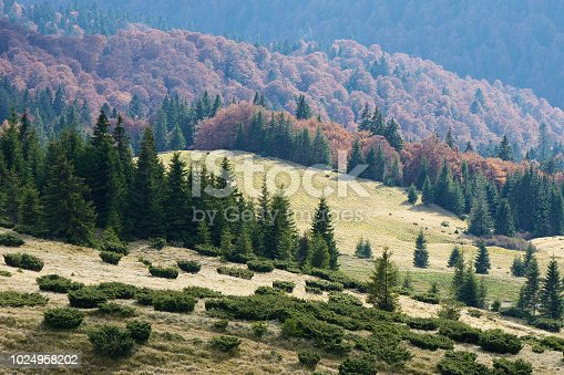 istock Autumn landscape with forest in the hills 1024958202