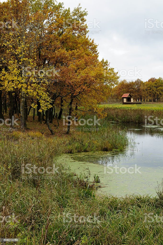 Autumn landscape with oak trees and lonely house stock photo