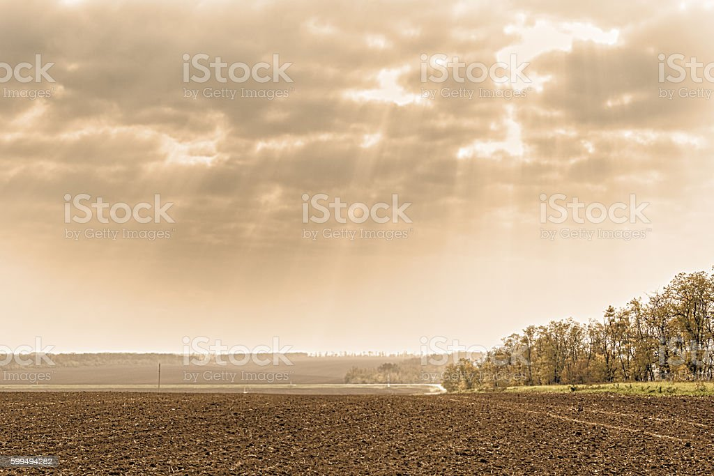 Autumn landscape with plowed field and acacia trees, photo toned stock photo