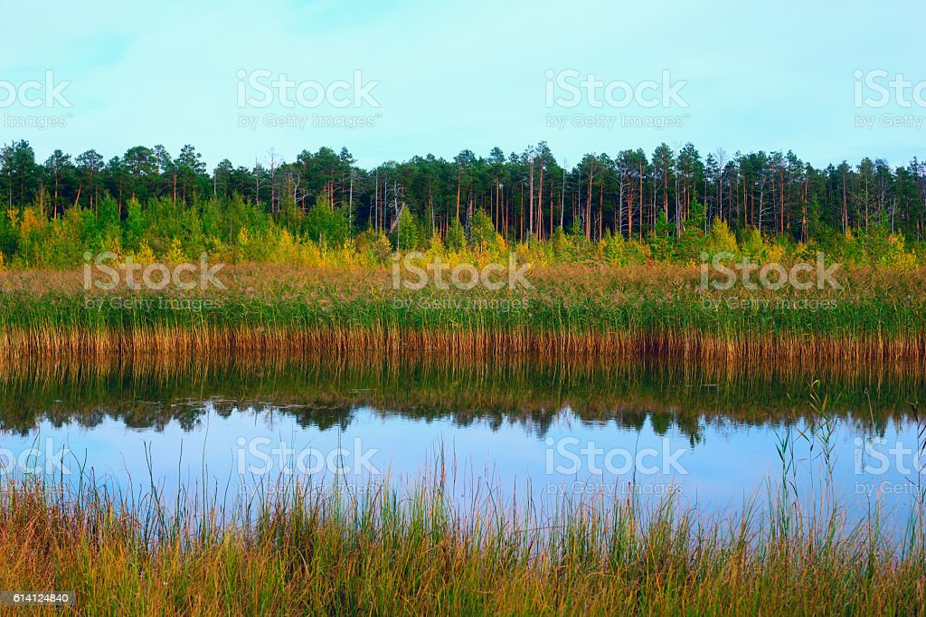 Autumn landscape with reflection in water . stock photo