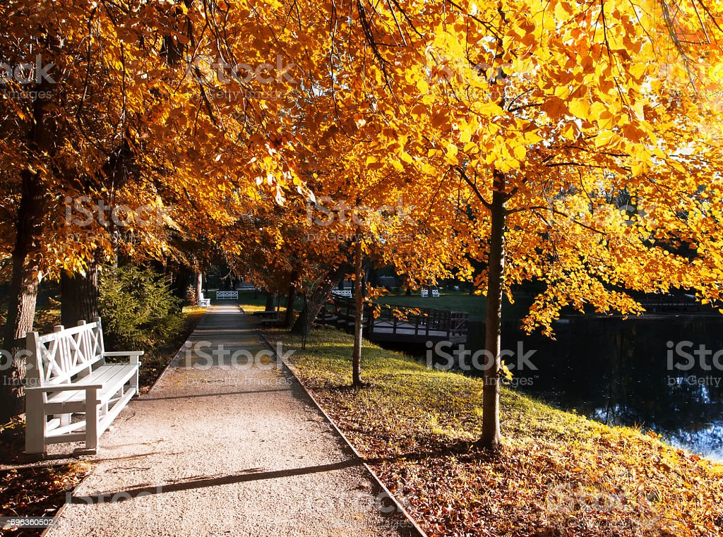 Autumn landscape with the sun in the park royalty-free stock photo
