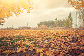Autumn landscape, yellow leaves on the grass, the sun is shining. Autumn, natural background.