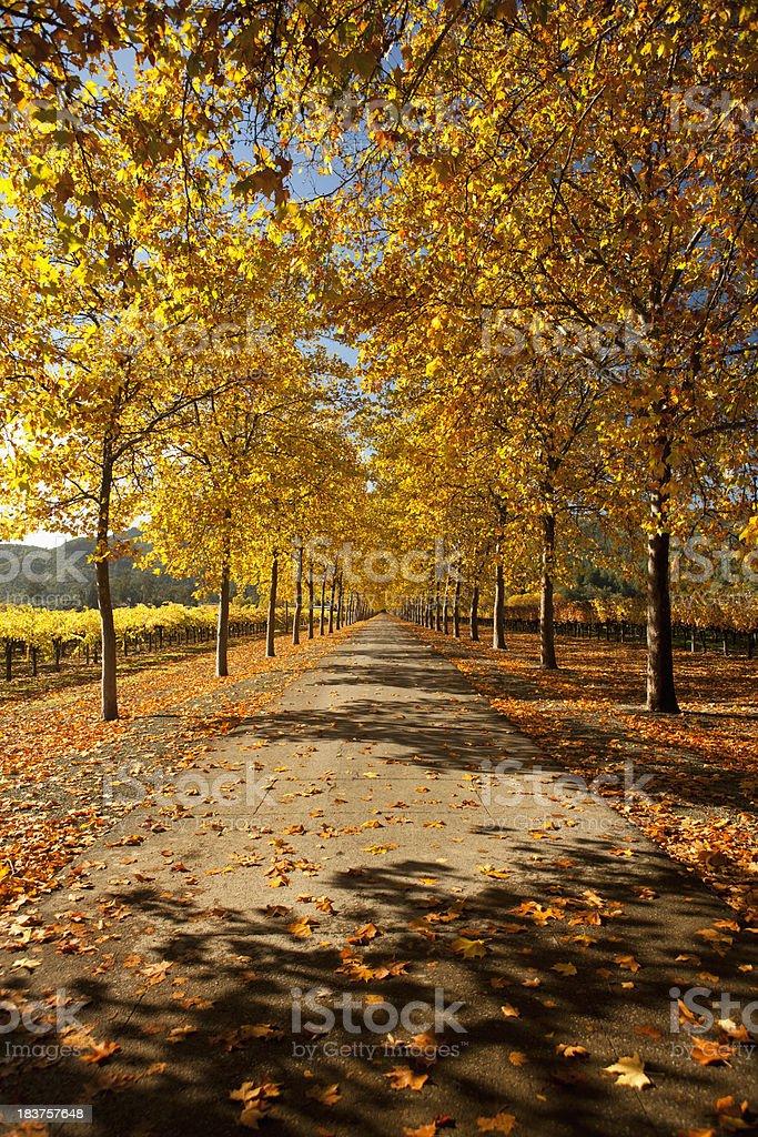 Autumn lane in Napa Valley, California royalty-free stock photo