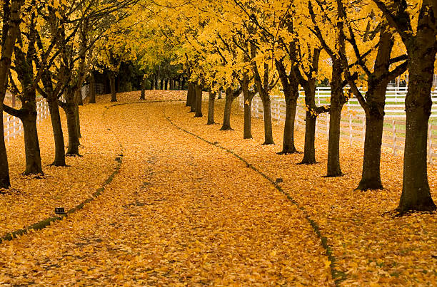 autumn lane - bend oregon stock pictures, royalty-free photos & images
