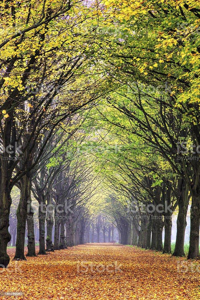 Autumn lane royalty-free stock photo